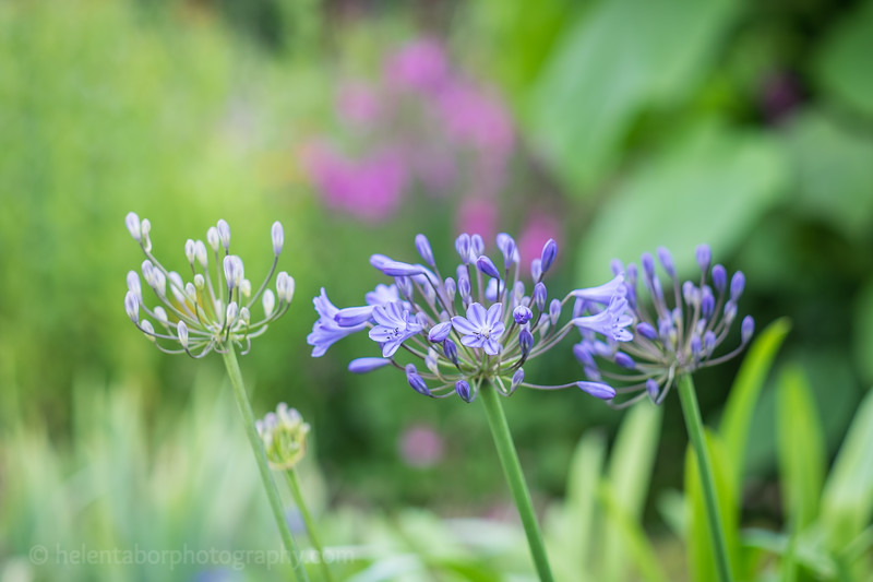 Hob Green garden-31.jpg