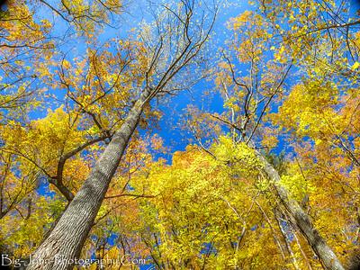 Asbury Hills Trails South Carolina hike 11-18-17