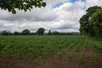 Interesting Fields