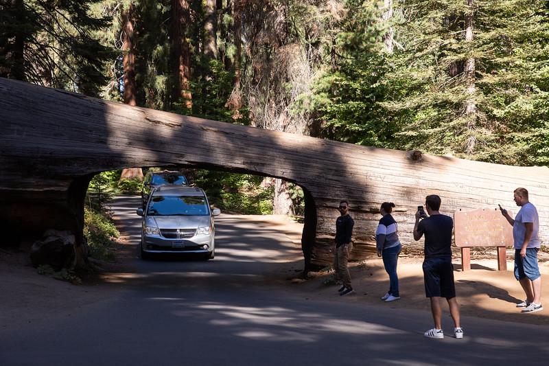 WVWS_Sequoia National Park-6884.jpg