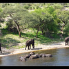 Boteti River Scene, Botswana 2010