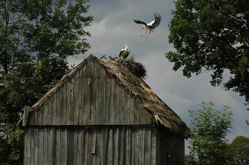gniazdo na dachu.jpg