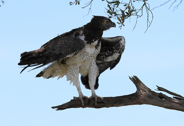 Birds of the Mara Reserve Kenya 2012