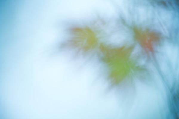 Leaves 2011