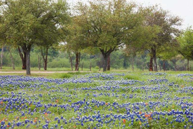 2015_4_3 Texas Wildflowers-7762.jpg