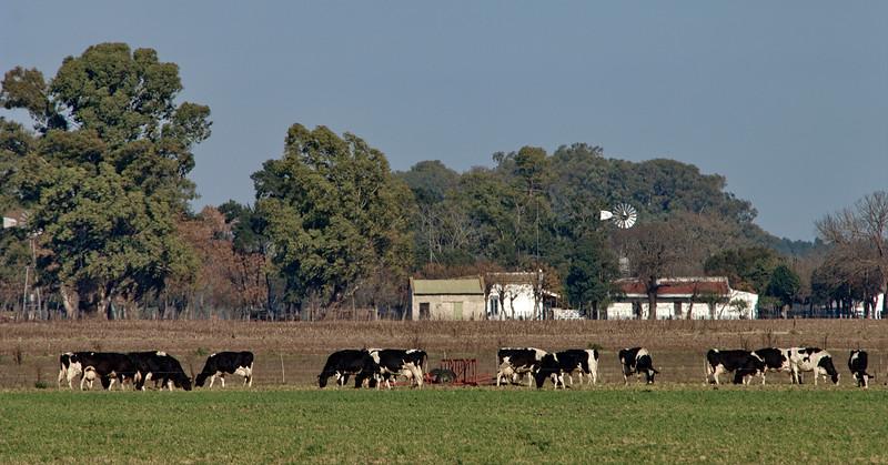 Campo argentino 3