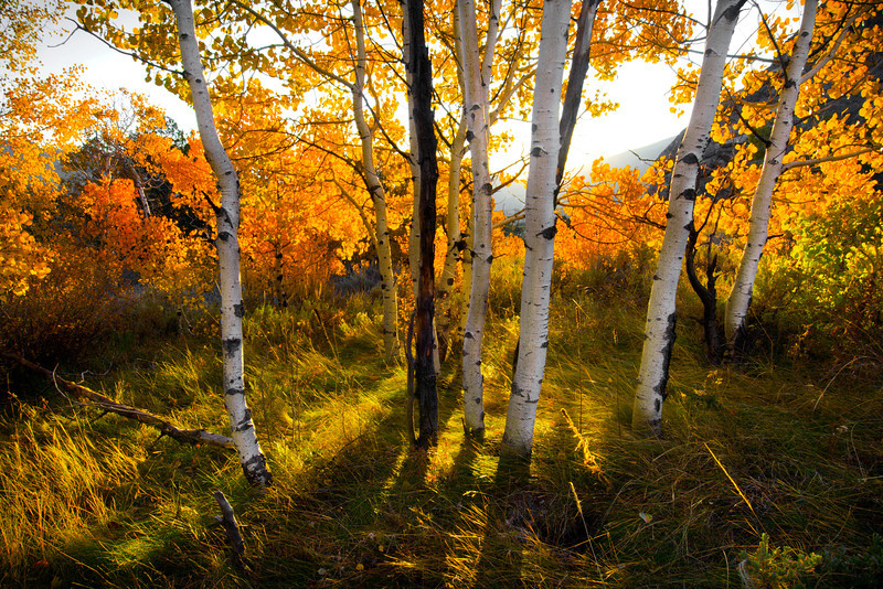 Autumn Forest, Oakley - Idaho  Near the Albion Mountains, on the edge of the Snake River Plain, is the tiny victorian town of Oakley. And outside of this town, south toward the City of Rocks National Reserve, are many small groves of aspen, huddled into folds of the hills and tucked into wet basins.