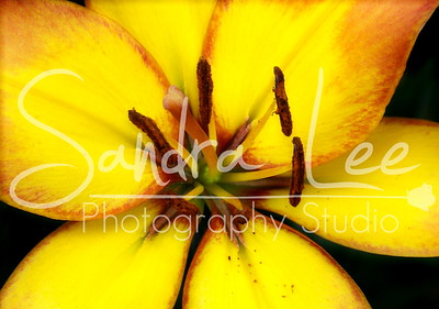 From the Garden by Petoskey photographer, Sandra Lee, garden photography of Northern Michigan