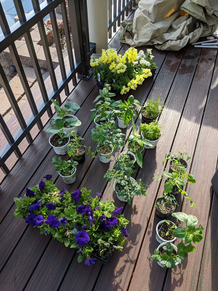 Flowers, vegetables, and herbs from Home Depot, Apr 24, 2020