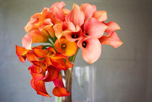 Ingrid Rose Floral Artistry