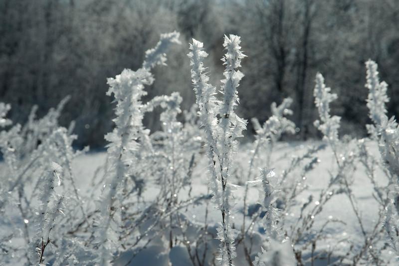 ARR by Penny Jesse-5208 Frosty.jpg