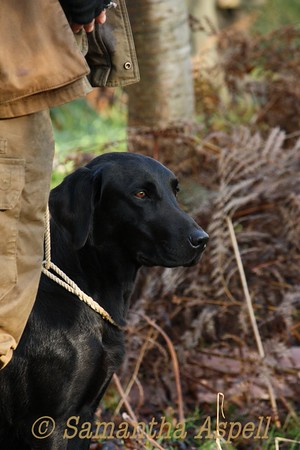 Chiltern Gundog Society Novice Trial 16th Dec 2014
