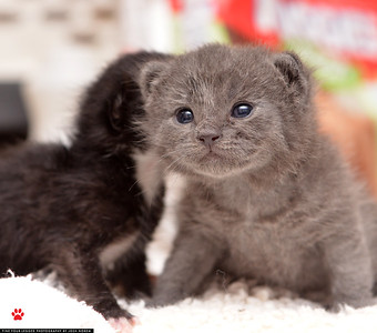 Toni's Kitty Rescue 2015
