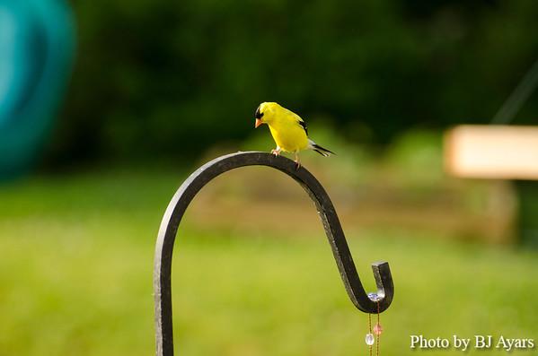 My Backyard Bird Sanctuary
