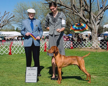 """GCH Moonlight's Rock'n In the Free World """"Indy"""""""