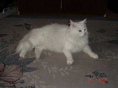 2005-07-06 Отпуск Беларусь