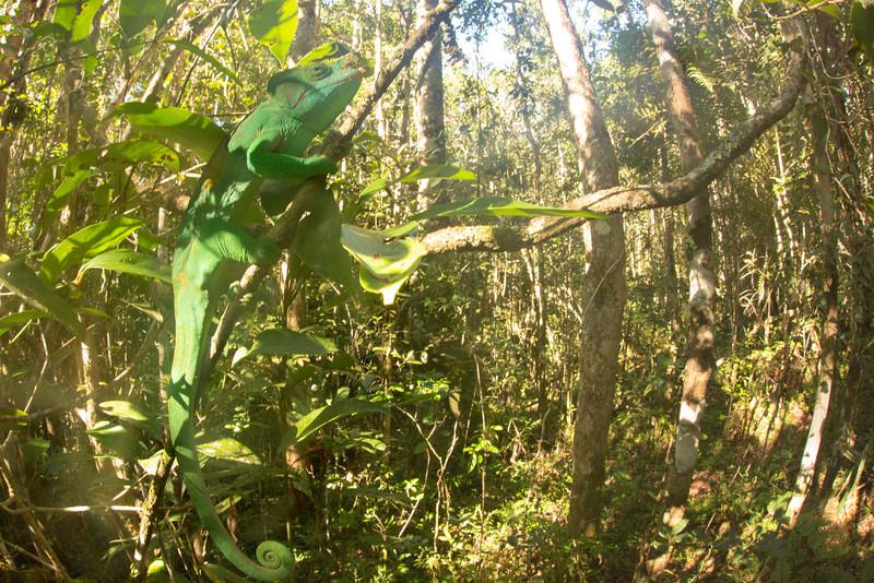 Madagascar_2013_IG3A2834.jpg