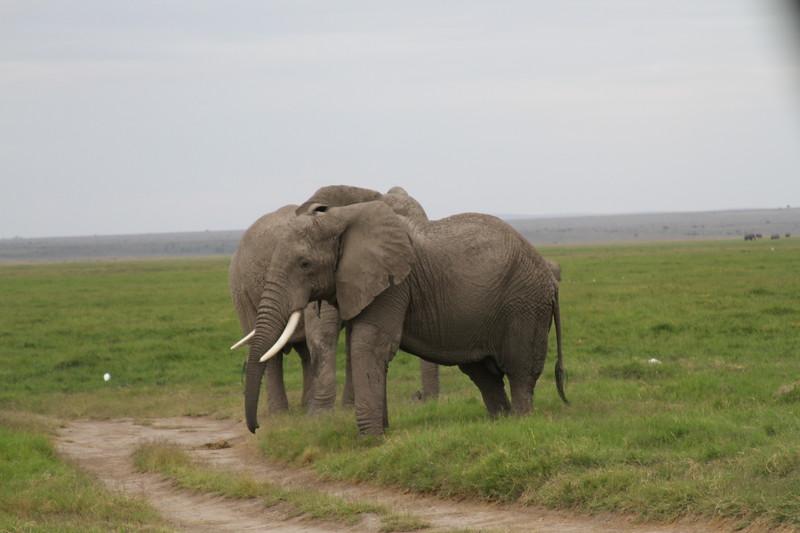 Kenya 2019 #2 1594.JPG