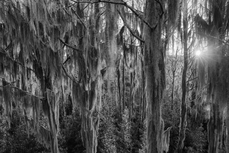 Okeefenokee Swamp 2020-8.jpg
