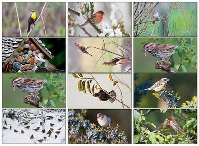 Songbirds 2