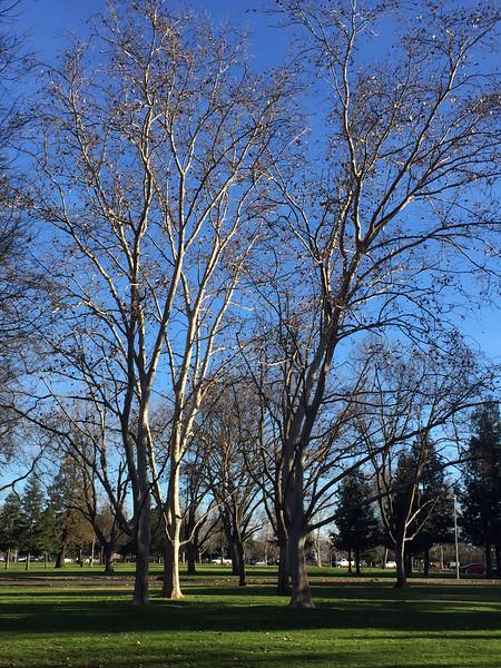 January wedding trees.jpg