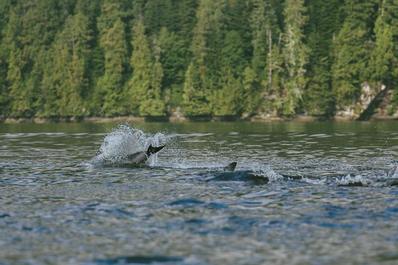 150910_Dolphin_3932.jpg