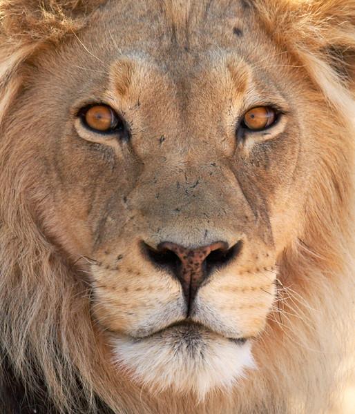 Lion - 5015.jpg
