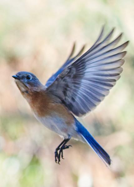 Woodland Birds Georgia