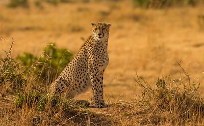 Kenya Maasai Mara  JUNE  2021