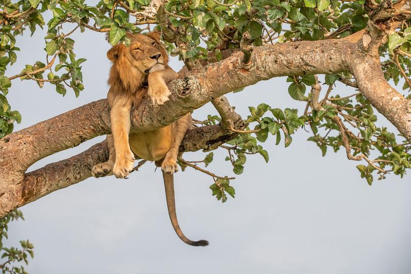 Uganda_T_QE-484.jpg