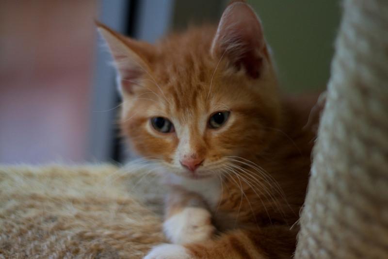 Kittens - Romano.jpg