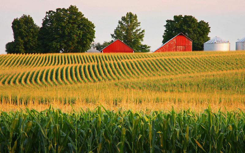 Cornfields in Illinois
