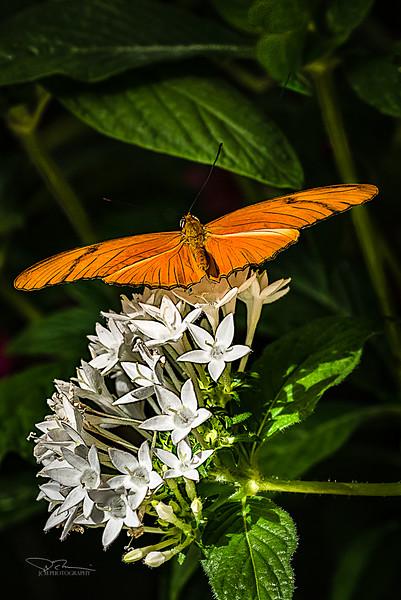 JM8_9031 orange sharp r2.jpg