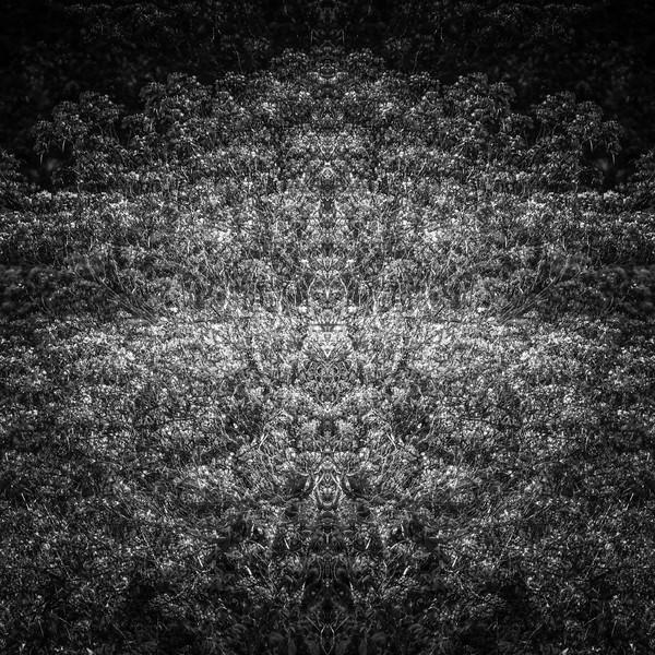 6470-Edit.jpg