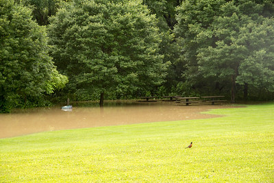 July Rain 2013