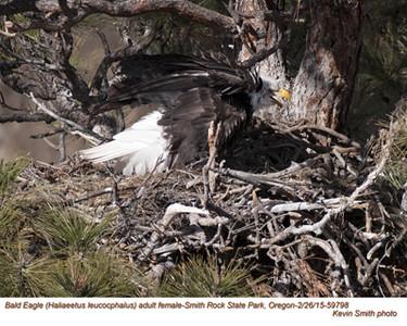 Bald Eagle F59798.jpg