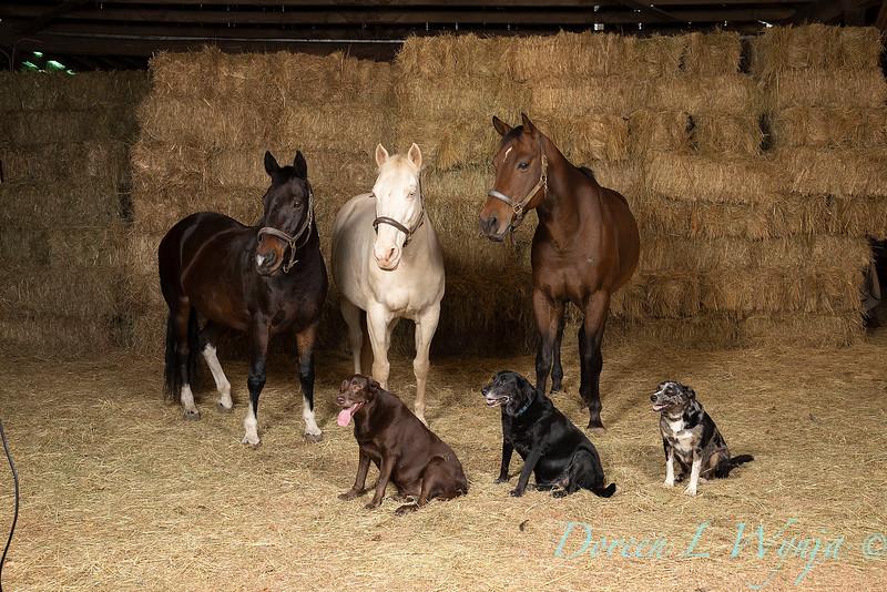 Horse family portrait_112.jpg