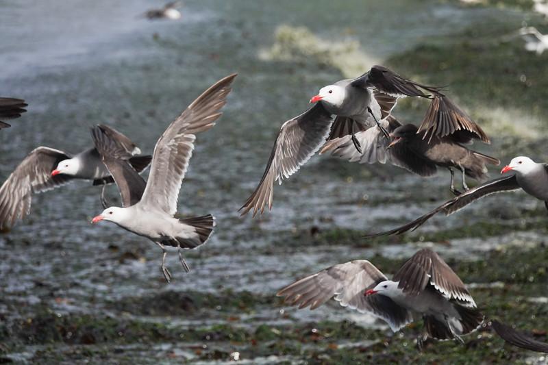 Flying Washington state birds