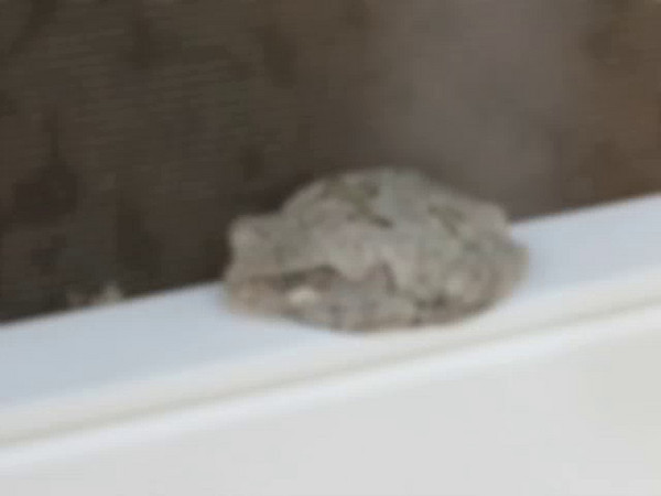 This lil guy hung out on our screen porch door all day.