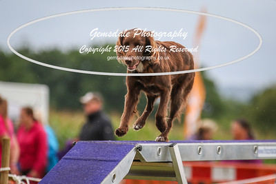 Large Agility Graded 1,2,3 LH