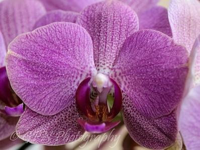 Indoor Flowers 2015