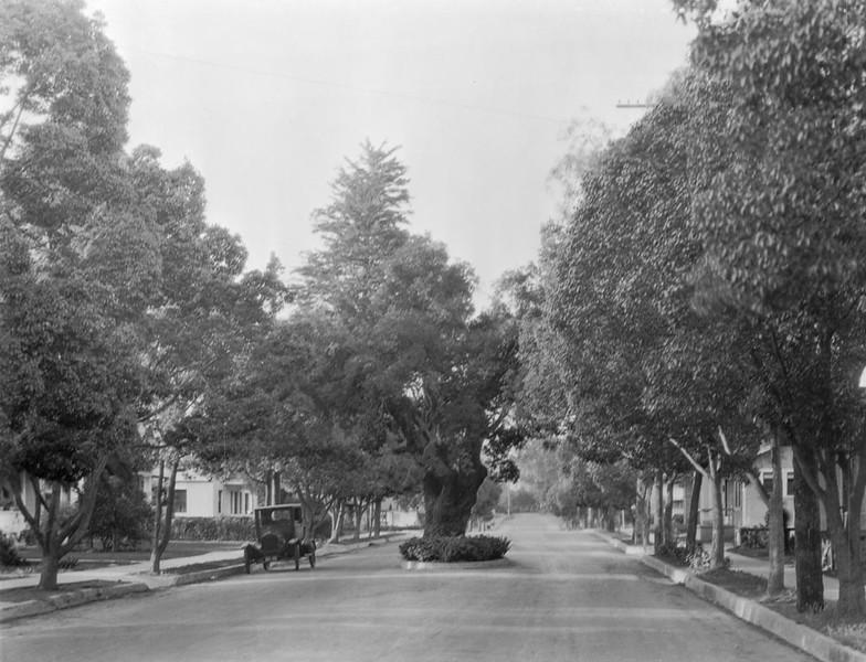 Mission Oak on Padre's Trail