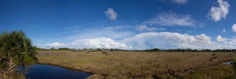 Overlooking the marsh Black Point Wildlife Drive Merritt Island NWR, Florida December 2012
