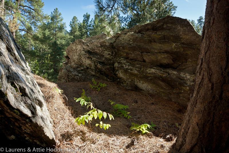 Rocks in Forest at Black Hills, route 26A