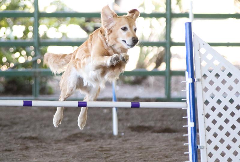 3-15-2015 Bloodhound-1548.jpg