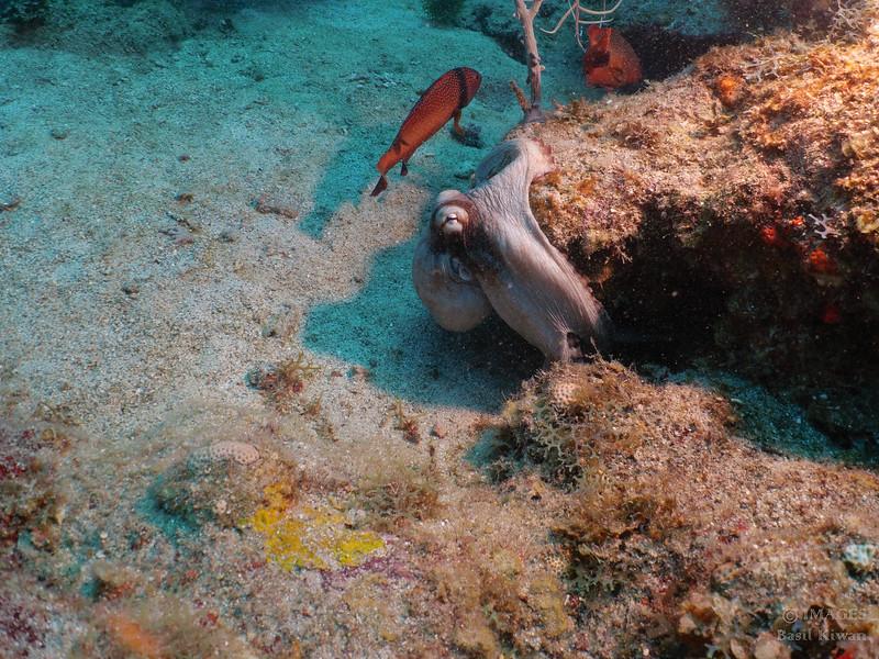 Saba Land and Sea-1000865.jpg