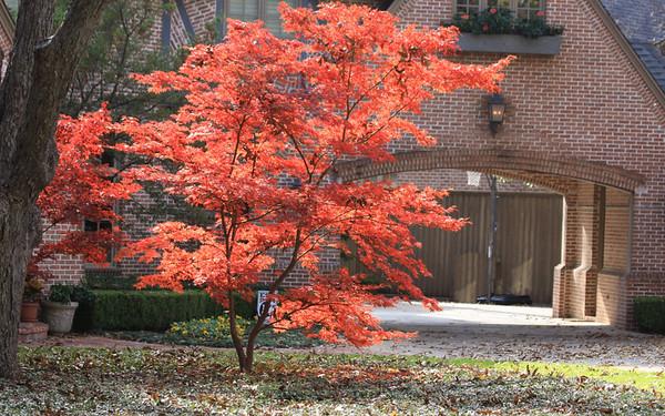 Fall 2010 Nature