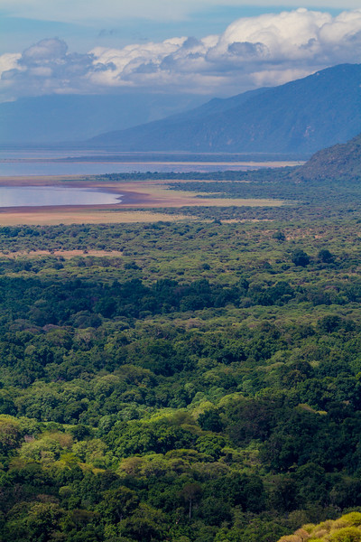 View of forest with lake in background - East Africa - Tanzania