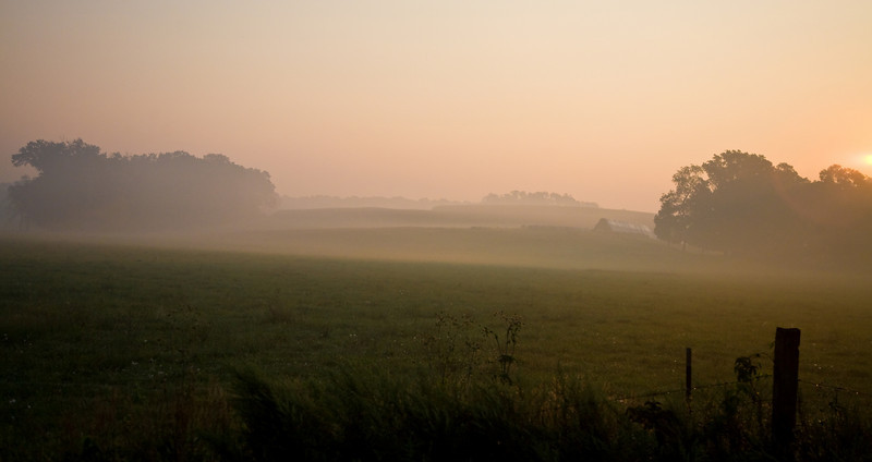 Sunrise Mist on Field
