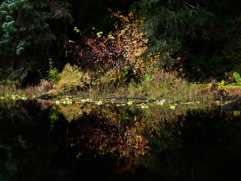auke lake shore color-2.jpg